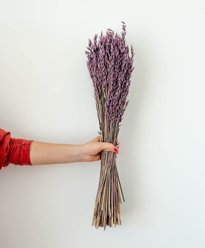 personne qui tient une botte d'avoine violette