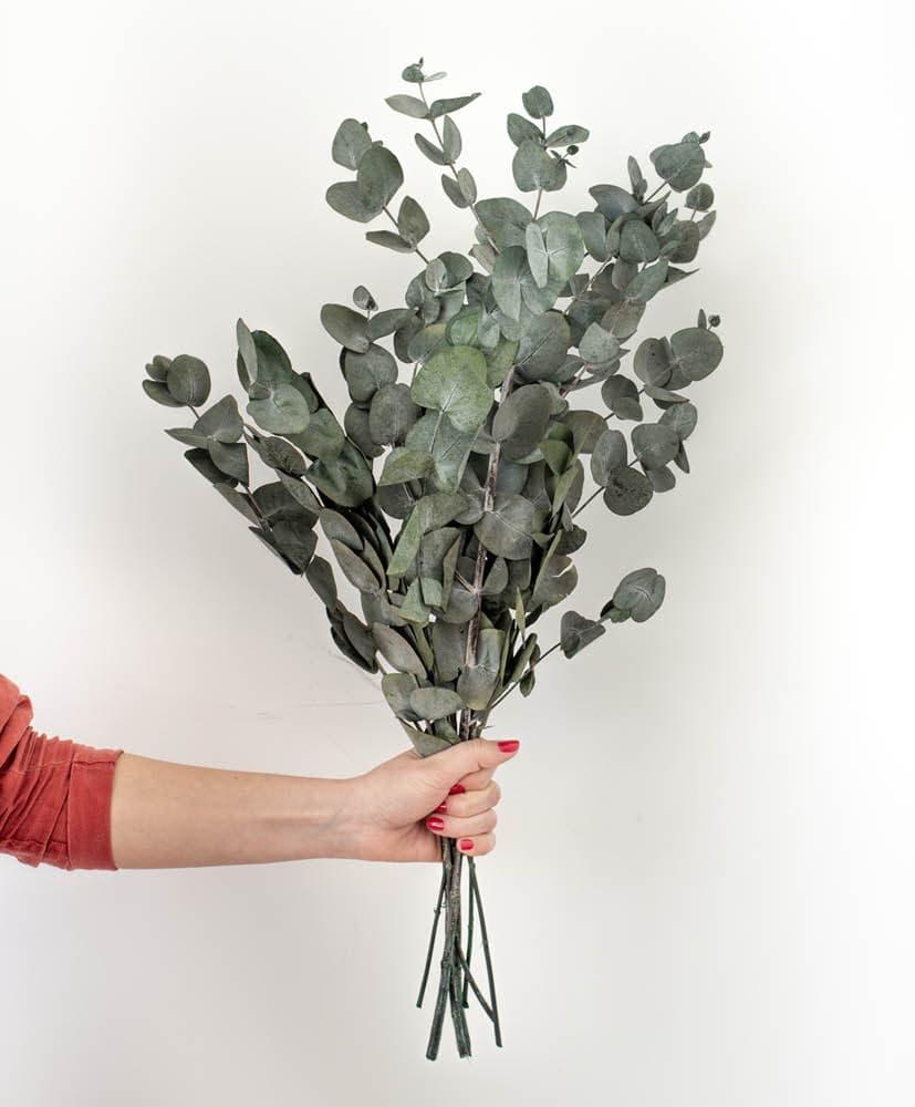 personne qui tient une botte d'eucalyptus