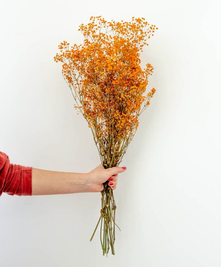 Orange Gypsophila