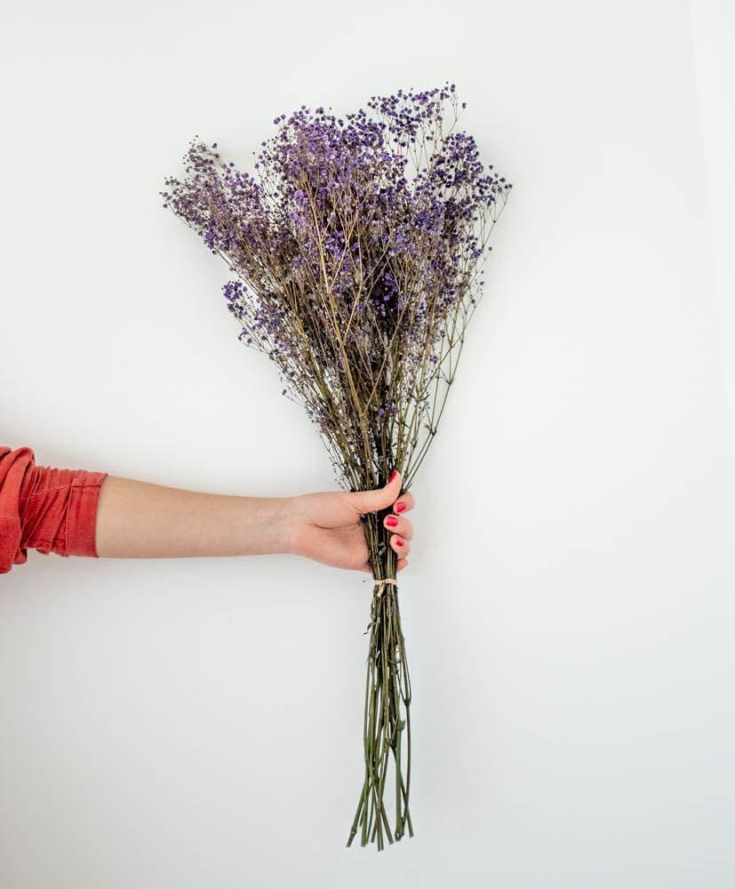 personne qui tient une botte de gypsophile violet