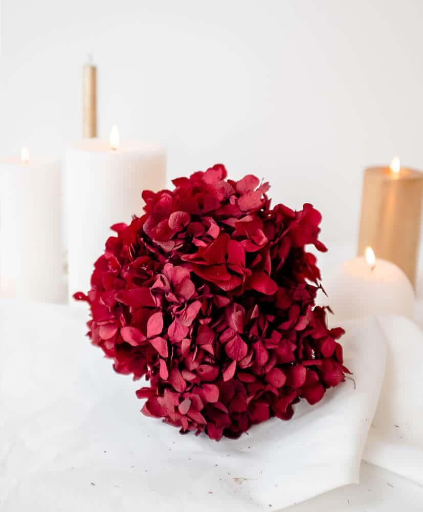 Hortensia stabilisé rouge bordeaux posé sur une table avec une nappe blanche