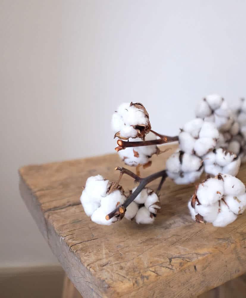 botte de fleurs de coton déposée sur un blanc en bois ambiance chaleureuse