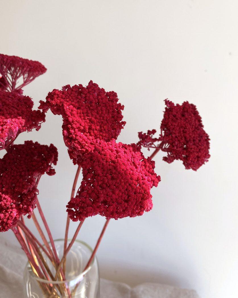 achillées rouges fleurs séchées