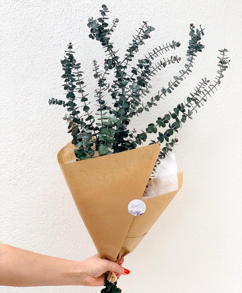 Eucalyptus baby-